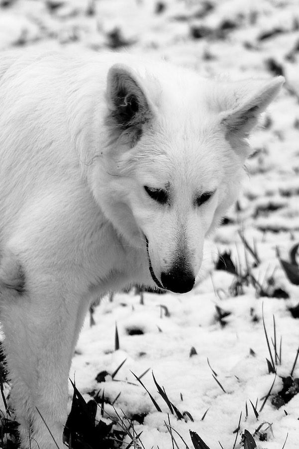 Dexter - Ultimatum del Branco Selvaggio