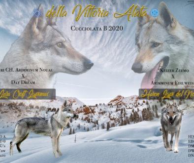 Cuccioli B cane lupo cecoslovacco della Vittoria Alata - Lara Croft Lupimax X Haron Lupi del Nord-1