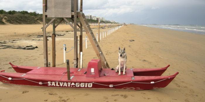 cane-lupo-cecoslovacco-zoe-vittoria-alata-friuli-venezia-giulia-salvataggio-in-acqua